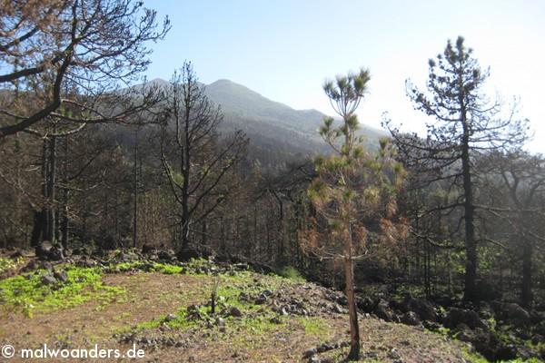 Blick auf die Berge und den verbrannten Wald