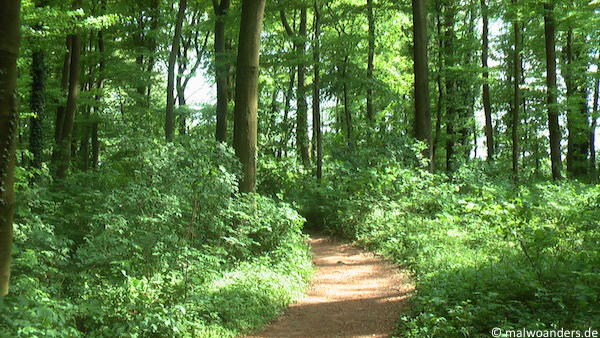 Weg durch die Baumberge