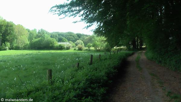 Weg entlang von Wiesen, Feldern und Wald