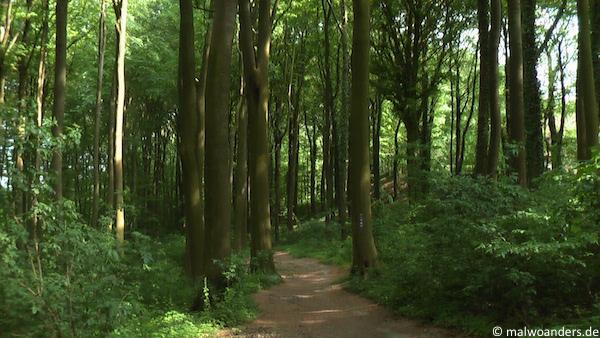 Buchenwald am Nordrand der Baumberge
