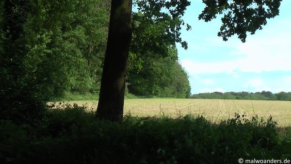 Baumberge09