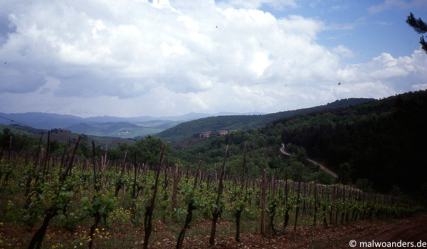 Weinberge im Chianti-Gebiet
