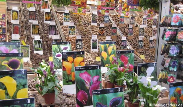 Blumenmarkt Amsterdam