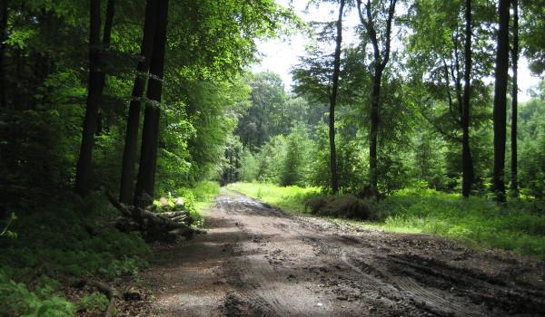Waldweg in den Baumbergen
