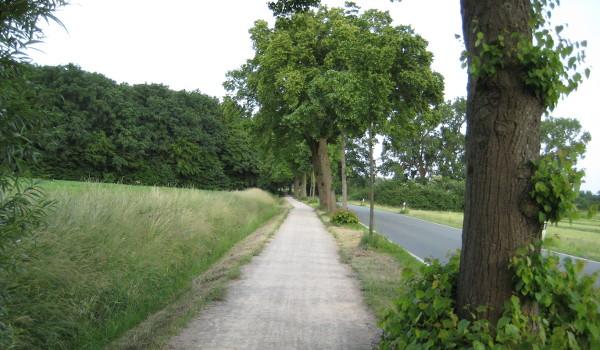 Rückweg entlang des Horstmarer Landwegs