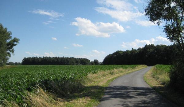 Münsterländische Maislandschaft