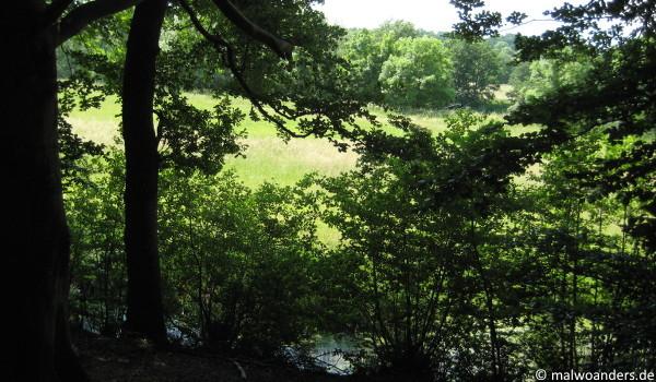 Blick aus dem Wald auf die Emsauen