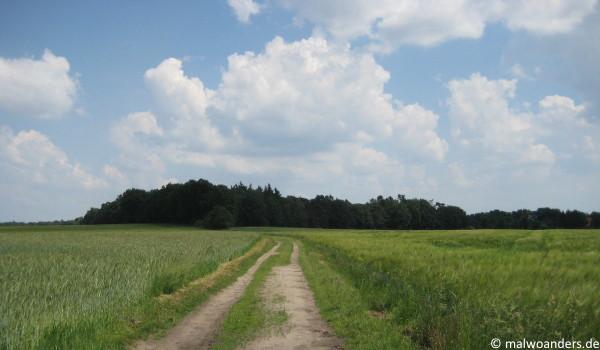 Auf sandigem Boden durch Felder und Wiesen