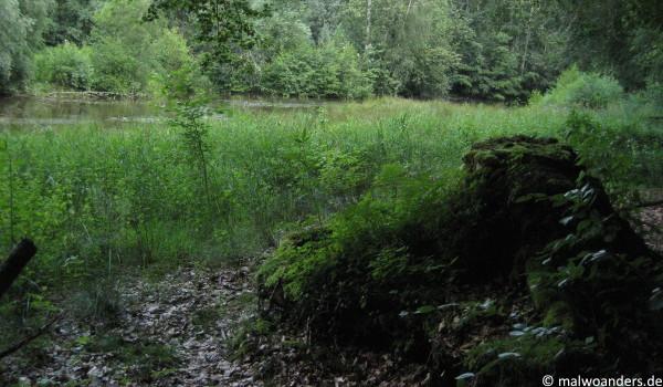 Naturschutzgebiet Tiergarten Wolbeck