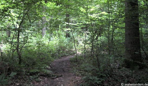 Wald bei Natrup-Hagen