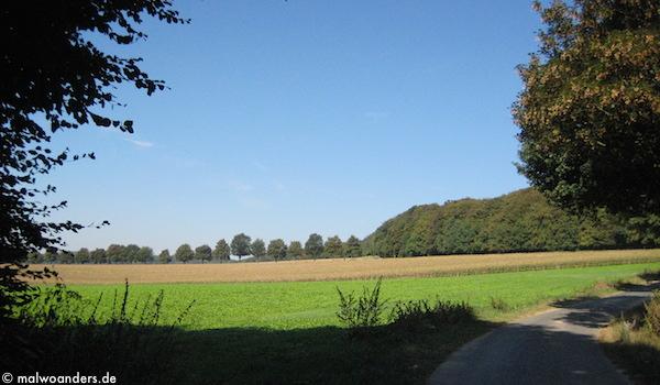 Vom Parkplatz aus bergan an Wald und Feldern entlang