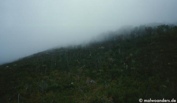 Von den Bergen kommt der Nebel