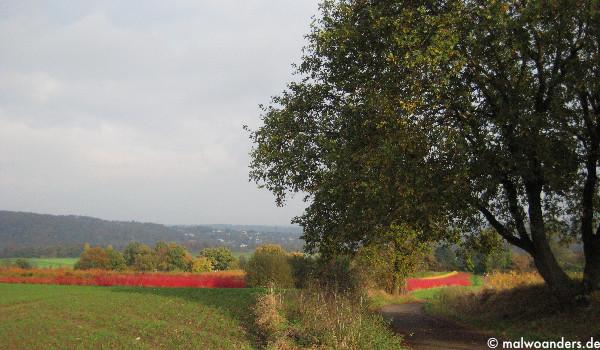 Roter Hartriegel und Blick auf Heisingen